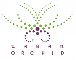 Urban Orchids